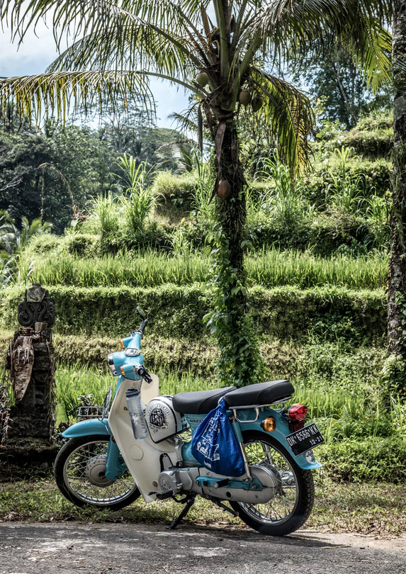 Motorbike and palm trees