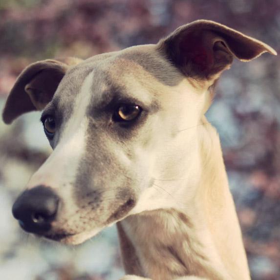 Aquarius: Greyhound