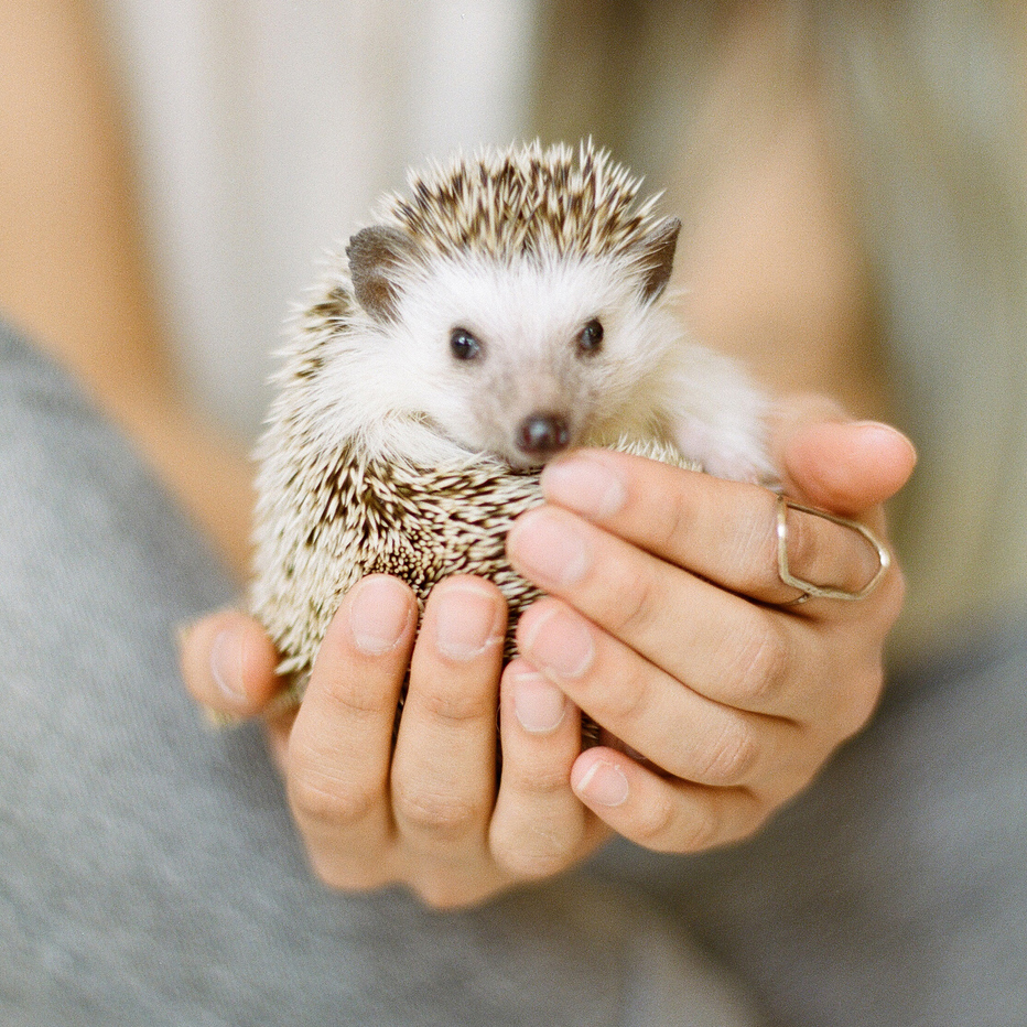 Hedgehog: Not allowed