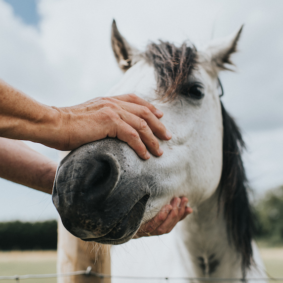 Horse: Allowed