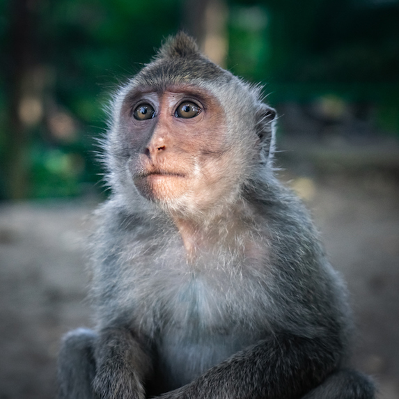 emotional support monkey