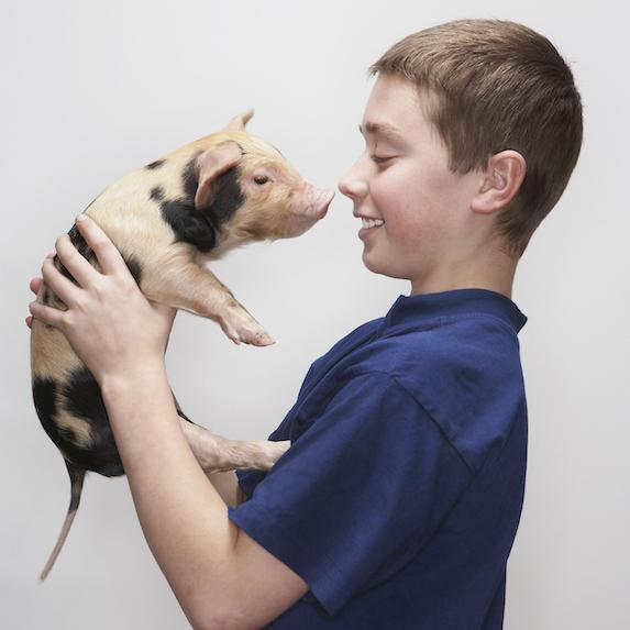 emotional support pig