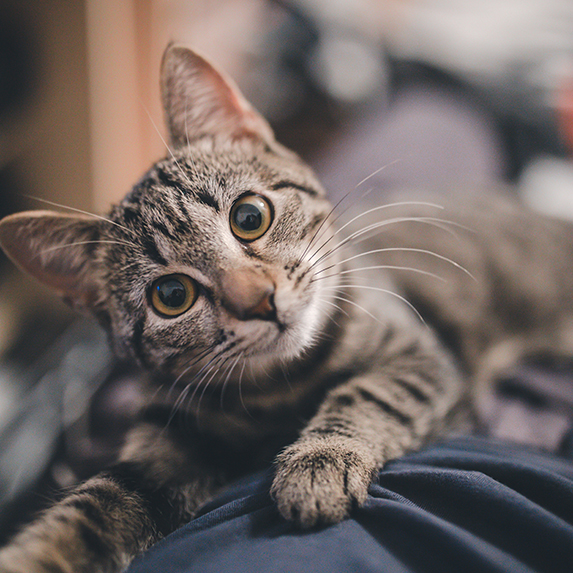 Myth: You have to give up Toby the tabby cat