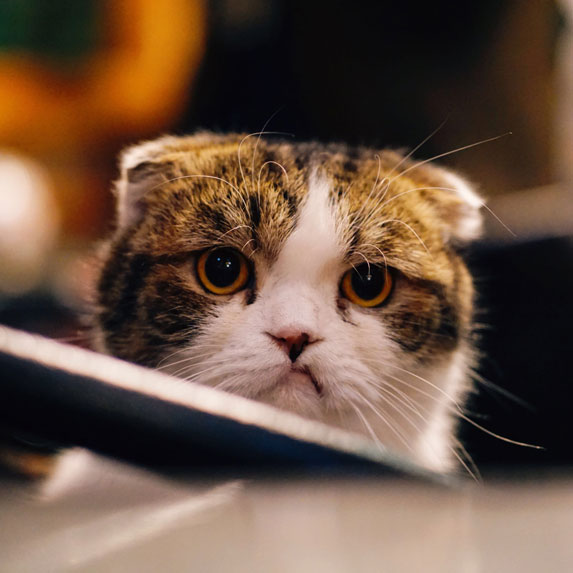 Sad frowning cat