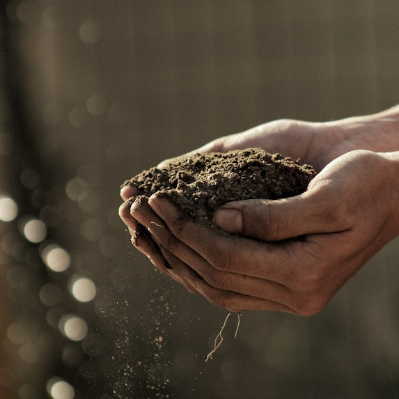 Closeup of hands holding soil