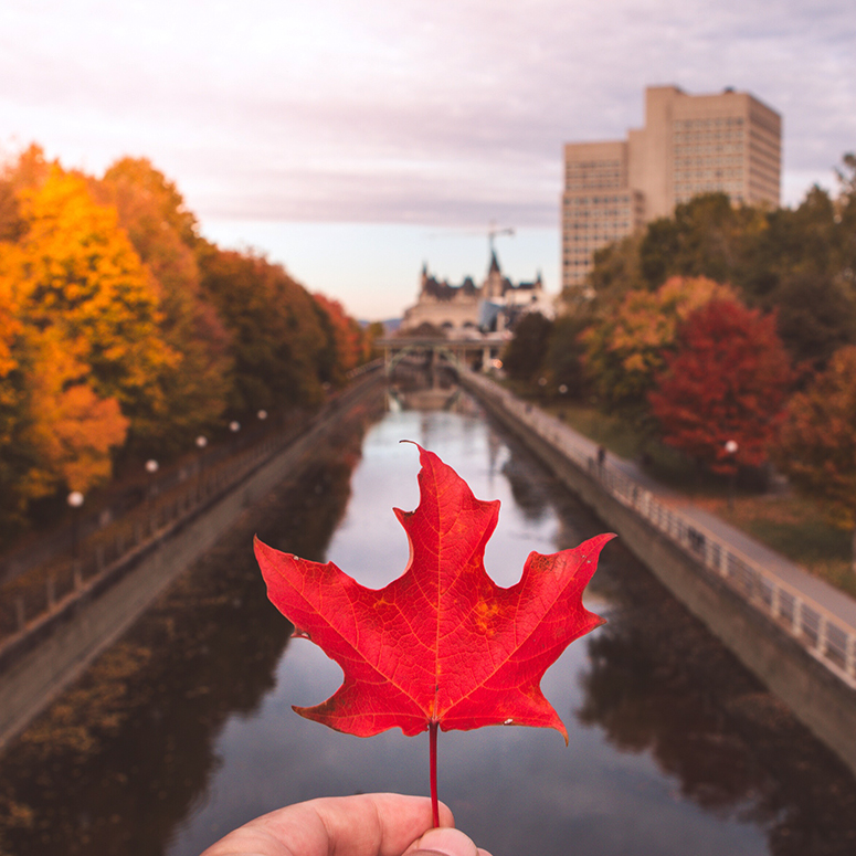 woman holding maple leaf above canal