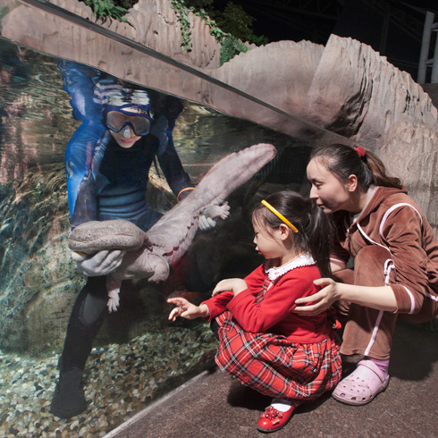 Aquarist in a tank while a family looks on