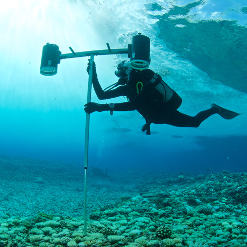 Geoscientist studying bleached coral