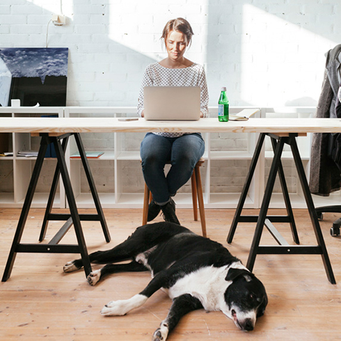 Woman working at desk with dog laying underneath the table