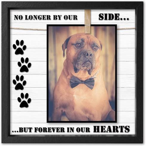 Dog in a memorial frame