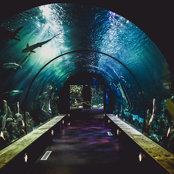 A tunnel going through an aquarium, showing a shark swimming overhead